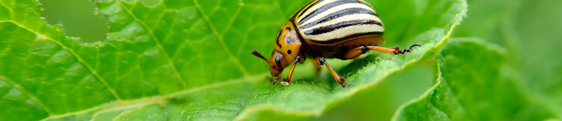 environmentally friendly green pest control