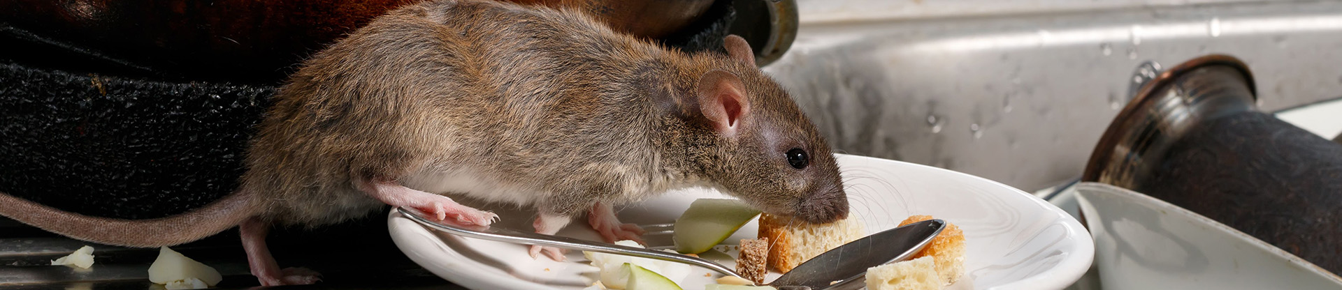 residential and commercial pest control for rodents